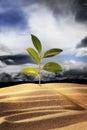 image photo : New plant growth