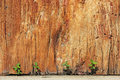 New Plant Growth survives between rock and a hard place Royalty Free Stock Photo