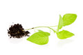New plant with soil Royalty Free Stock Photography