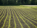 New planted field in spring Royalty Free Stock Images