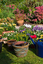 New plants in flowerpots for autumn garden Royalty Free Stock Photo
