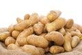 New rattes potatoes on burlap Royalty Free Stock Photo