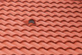 New roof tiles detail close up Royalty Free Stock Image