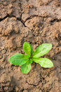 New seedling Royalty Free Stock Photo