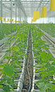 New technology cultivation Stock Photos