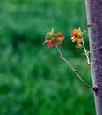 New trees leaf Royalty Free Stock Photo