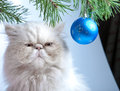 New Year's ball and  white cat Stock Image