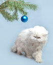 New year s picture a branch with new year s ball and white cat close up Stock Image