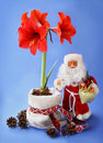 New year still life with red amaryllis and toy santa claus by father christmas ded moroz papa noel on a dark blue background Stock Photos