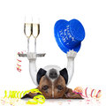 New years eve dog celebrating with champagne and a blue happy year hat lying upside down Stock Image