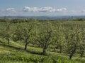 New York Apple Orchard Royalty Free Stock Photo