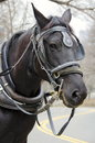New york city carriage horse a dark at work in central park Royalty Free Stock Images