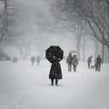 New York City, 1/23/16: Central Park covered in heavy snow during Winter Storm Jonas Royalty Free Stock Photo