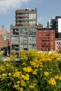 New york city highline urban park yellow flowers with black eyed susan and chelsea apartments Royalty Free Stock Photos