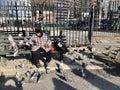 Manhattan street scene: A homeless man is feeding birds and pigeons in New York Royalty Free Stock Photo
