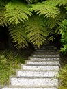 New Zealand: garden steps ferns Stock Photography