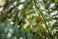 New Zealand iconic fern koru Royalty Free Stock Photo