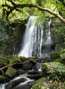 New zealand matai falls in catlins coast Stock Photo