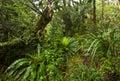 New Zealand Native Bush Royalty Free Stock Photo