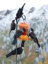 New Zealand native Tui birds on birdfeeder Royalty Free Stock Photo
