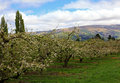 New zealand orchards the along the highways Royalty Free Stock Photo