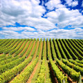 New Zealand vineyard Royalty Free Stock Photo