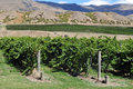 New Zealand Vineyards Stock Photos