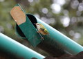 New zealands smallest bird the rifleman building a nest in this pipe Stock Image