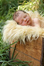 Newborn baby in a box Royalty Free Stock Images