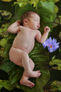 Newborn baby floating on green leaves in water pond of lotus flowers in nature Royalty Free Stock Photo