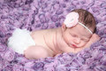 Newborn baby a with a flower on her head on purple background Stock Image