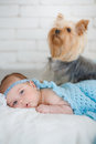 Newborn baby girl lying on her belly on a bed his stomach with dog Stock Image