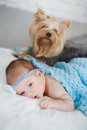 Newborn baby girl lying on her belly on a bed his stomach with dog Royalty Free Stock Photography