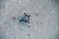 Newborn baby green golfina turtle approaching sea Royalty Free Stock Photo