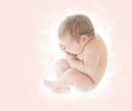 Newborn Baby, New Born Kid in Ninth Month Embryo, Human Fetus, U Royalty Free Stock Photo