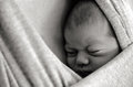 Newborn baby sleep a in peace in a sling wrap copyspace bw Stock Images