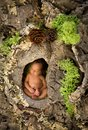 Newborn baby in a tree trunk Royalty Free Stock Photo