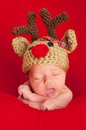 Newborn baby wearing a red nosed reindeer hat headshot of one week old crocheted shot in the studio on blanket Stock Photo