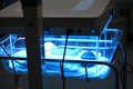 Newborn being treatment by ultraviolet light to solve jaundice in incubator issue Royalty Free Stock Image