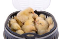 Newborn chickens isolated many in container on white background Stock Photography