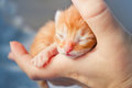 Newborn kitten Stock Image