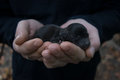 Newborn puppy in the hands of men. Little black dog baby. Royalty Free Stock Photo