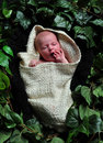 Newborn wrapped up, laid among leaves. Royalty Free Stock Image