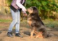 Newfoundland dog with owner in park Stock Images