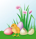 Newly Hatched Chick & easter eggs Royalty Free Stock Image