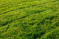 Newly mowed grass lawn with tire diagonals in late afternoon light Royalty Free Stock Photo