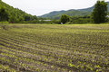 Newly planted corn rows on a farm in the upper valley region of new hampshire near the connecticut river Stock Photography