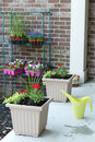 Newly planted spring flowers in flowerpots Royalty Free Stock Photo