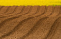 Newly ploughed field ready for new crops and rapeseed oil Royalty Free Stock Photos