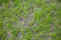 Newly seeded grass lawn in spring time Stock Photos